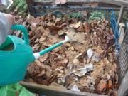 ボカシ、発酵液散布